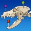 vet-Anatomy - iPadアプリ