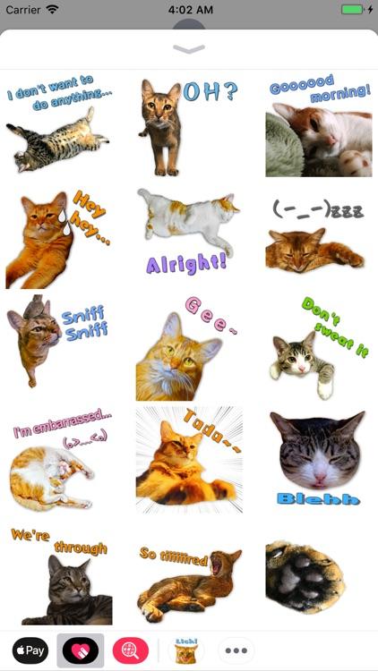 A fun cat message sticker