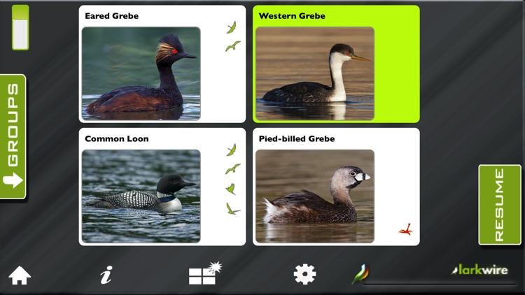Larkwire Learn Bird Songs 2