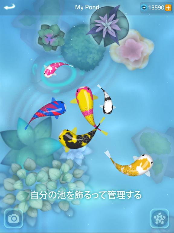 禅の鯉 2 - Zen Koi 2のおすすめ画像5