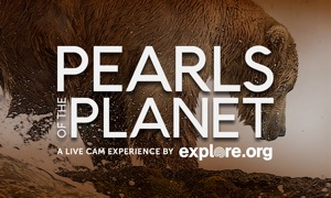 Pearls of the Planet