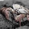 Ryota Ikegai - Crabhouse アートワーク