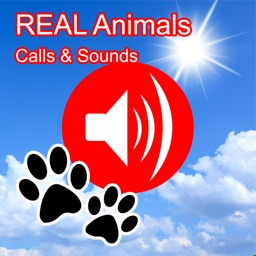2000+ Animal Sounds Calls