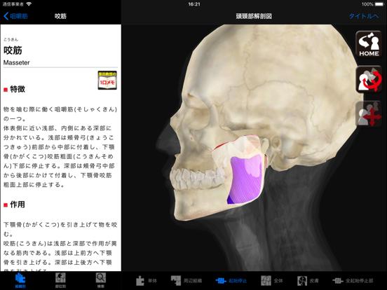 DS ANATOMY HEAD & NECKのおすすめ画像3
