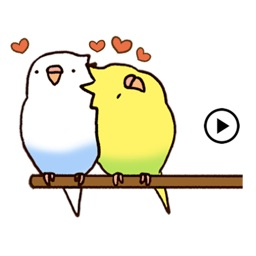 Animated Lovely Budgie Sticker