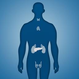 Endocrine System Trivia