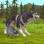 WildCraft: Sim en ligne