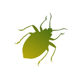 Insecta:
