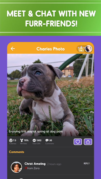 Pet Parade: Cutest Dogs & Cats free Gold and Silver hack