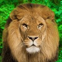 Codes for Animal Kingdom - Quiz Game Hack