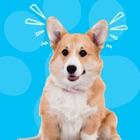 Dog Whistle & Translator