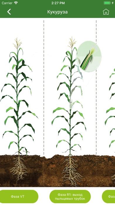 Каталог Pioneer seeds