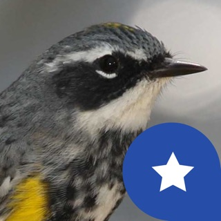 EyeLoveBirds: Bird Checklists on the App Store