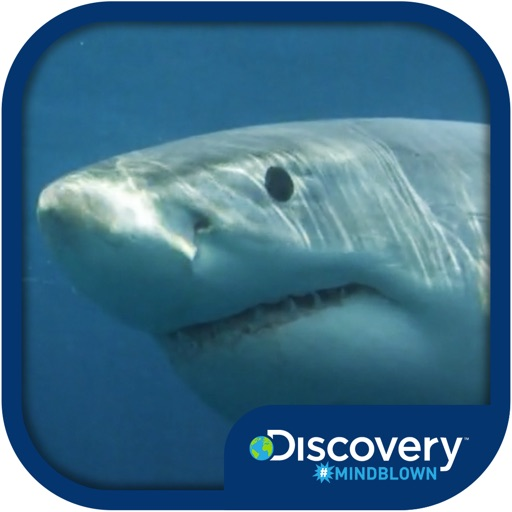 Discovery #MindBlown: Sharks