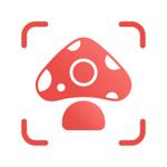Picture Mushroom - Mushroom ID на пк