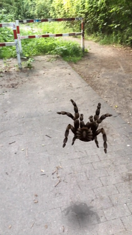AR Spiders screenshot-3