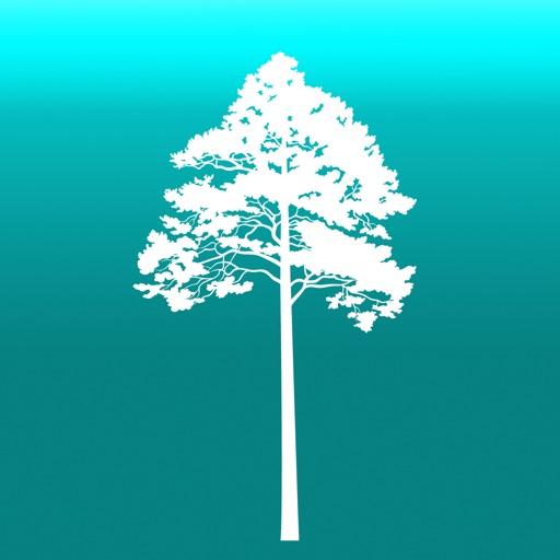Arboreal - 樹高