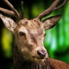 Safari Arena: Francotirador 3D