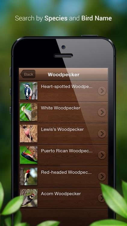 Bird Songs - Bird Call & Guide screenshot-4