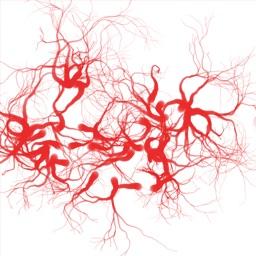 血管年齢測定