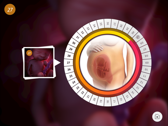 Pregnancy: Life in the Womb screenshot four