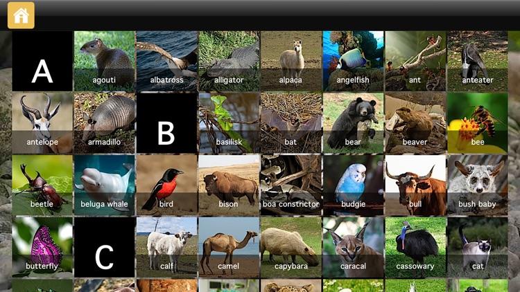 ABC Animals - Your Alphabet Letters Mini Adventure