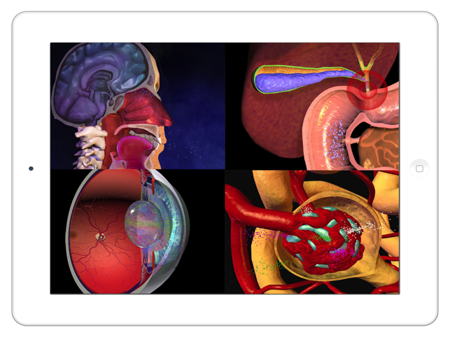 Anatomy Atlas 3d Anatomical Model And Animation On The App Store