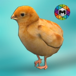 Chick Simulator