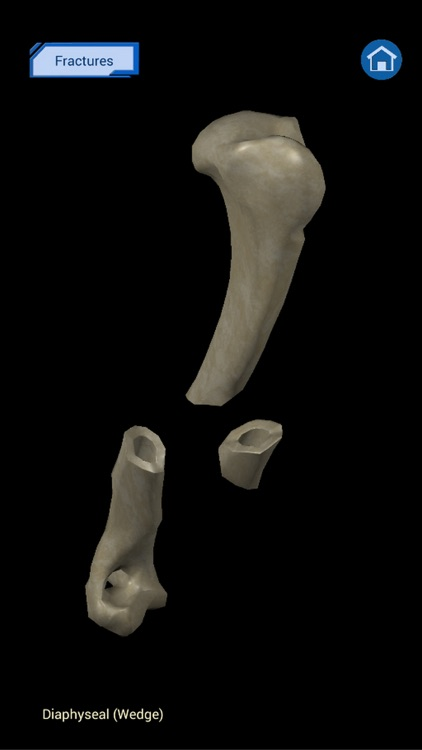 Osteology in Dogs