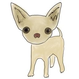 Chihuahua Powa