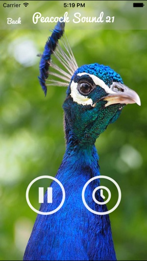 Peacock - Chirping Sounds on the App Store