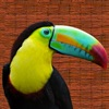 Animal Calls with bird sounds like an audio zoo