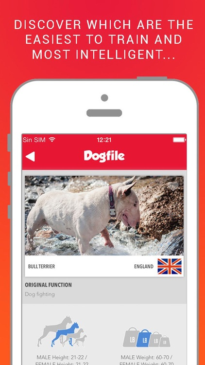 Dog File: Find the perfect dog breed that fits you screenshot-4