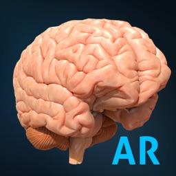 AnatomyAR+