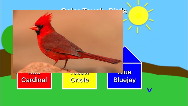 Color Touch: Birds screenshot-2