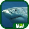 Animal Planet: Sharks