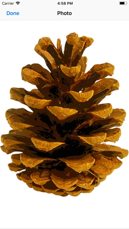 Pine Cone Stickers screenshot-1