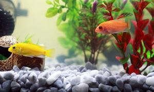Aquarium TV Edition