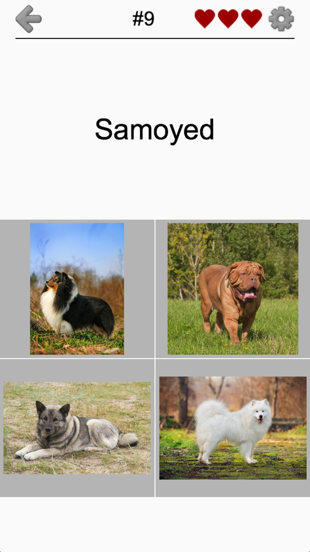 Dogs Quiz: Photos of Cute Pets hack tool