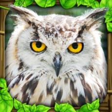 Activities of Owl Simulator