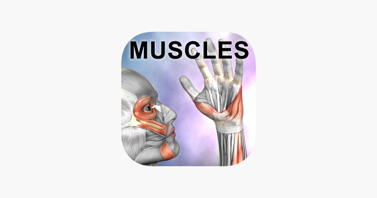 Learn muscle anatomy