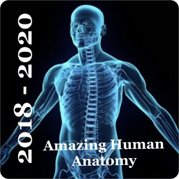 Human Anatomy  Encyclopedia