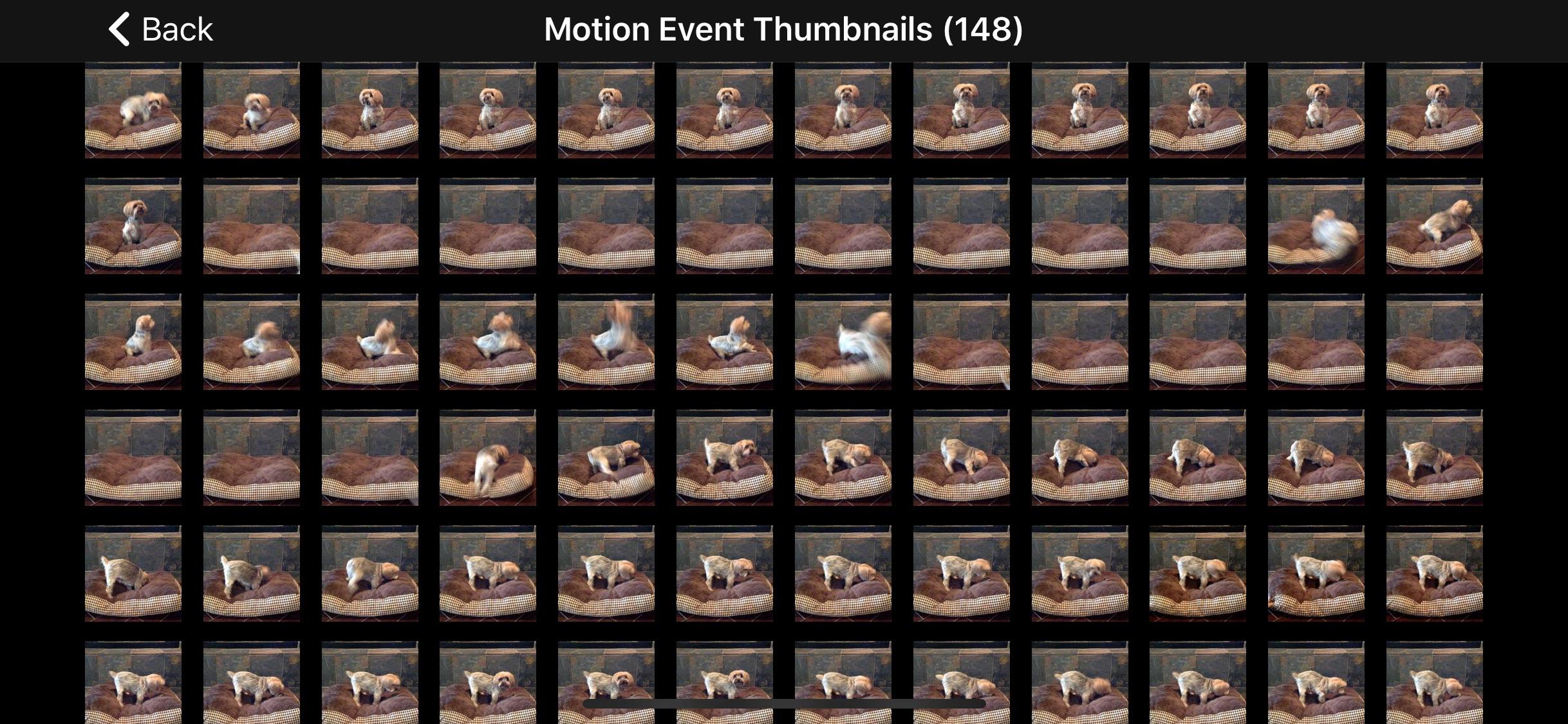 Screenshot do app iCam - Webcam Video Streaming
