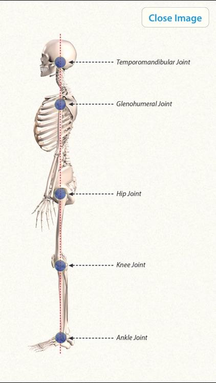 3D Yoga Anatomy Lite screenshot-4