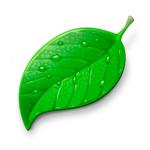 WildPlantID - Plant Identifier