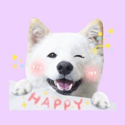 Shiba Dog Animations Stickers