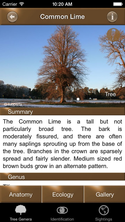 Winter Tree Id - British Isles