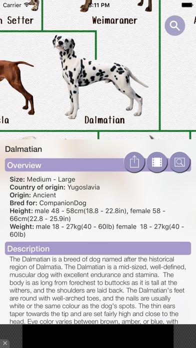Dog Breeds - for dog lovers - screenshot three