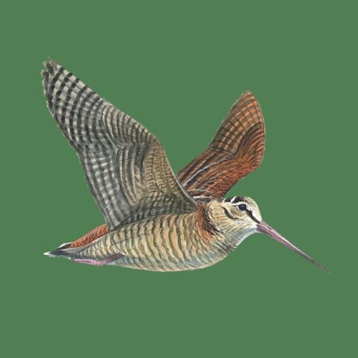Hunting Decoys - Birdwatching