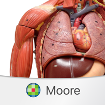 MOORE Clinical Anatomy Flashcards